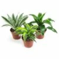 Растения, уход за ними